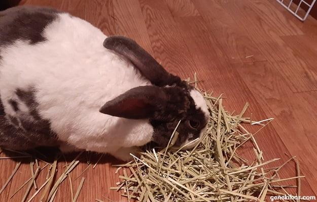 床の上に置いてある牧草を食べるうさぎ