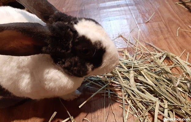 床の上でネイチャーブリードの牧草を食べるうさぎ