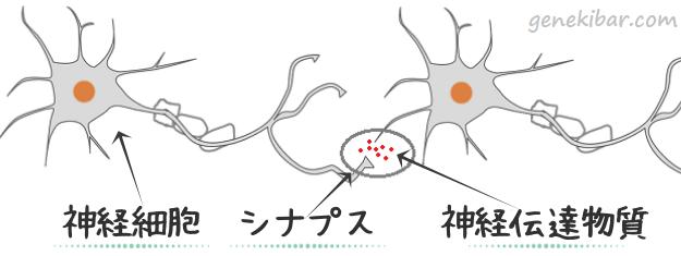 神経細胞、シナプスと、神経伝達物質