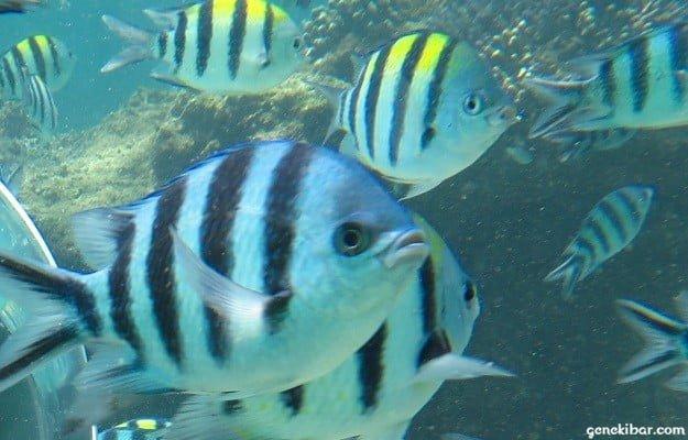 シーウォーカーで見た海底の魚