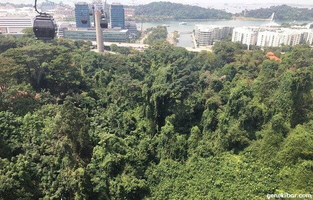 マウントフェーバー駅前の木々