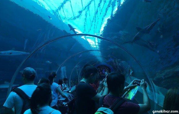 シャークシーのトンネル