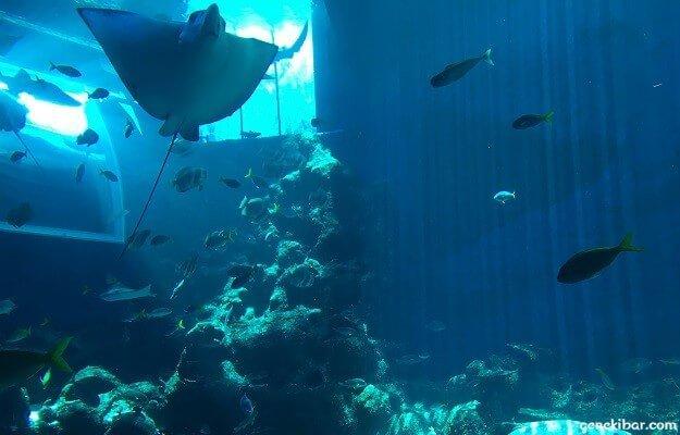 オープンオーシャンで泳ぐ魚