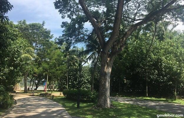 パラワンビーチ周辺の木々