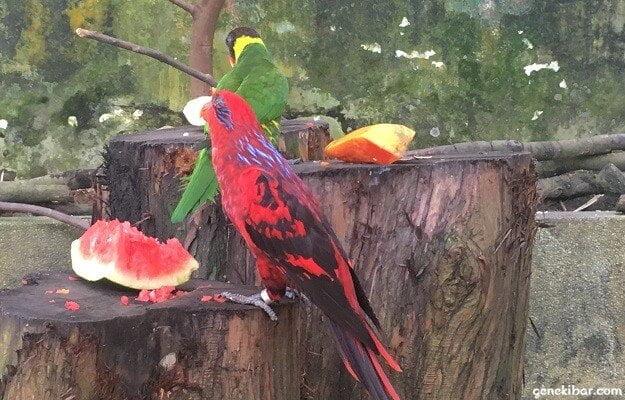 パラワンビーチの鳥がスイカを食べている