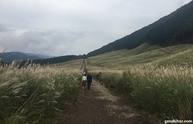 すすき草原の遊歩道