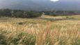 【道なき道を行く】黄金の絨毯を探し求め、仙石原のすすき草原へ