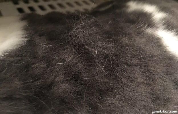 グルーミングで体に浮いてきたうさぎの抜け毛