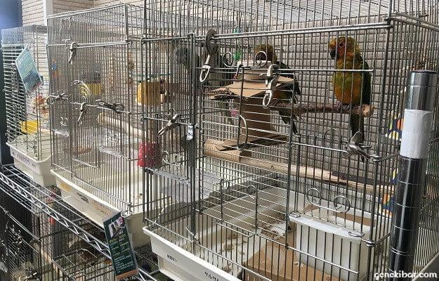 ケージの中に入っているとり村の鳥
