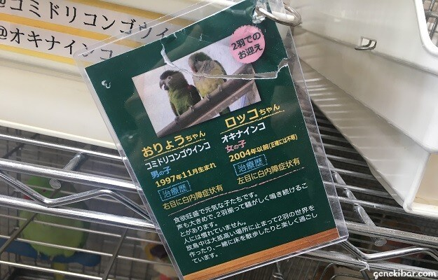 ケージに付いている鳥の説明カード