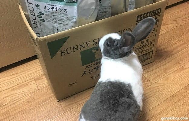 バニーセレクションのダンボールとうさぎ