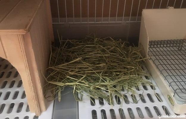 うさぎの留守番1泊2日分の牧草予備