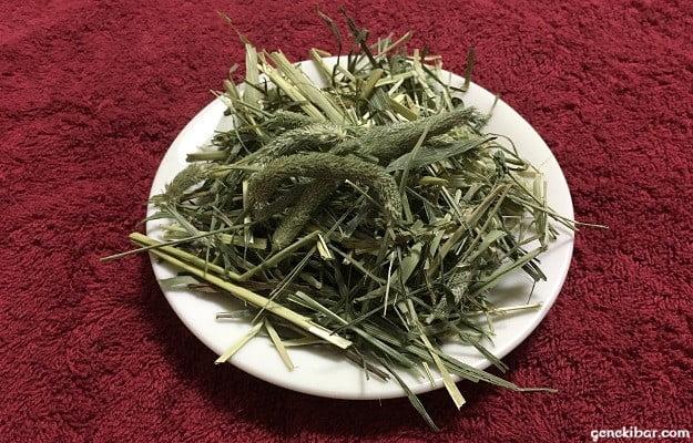 スーパープレミアムチモシー1番刈りの牧草
