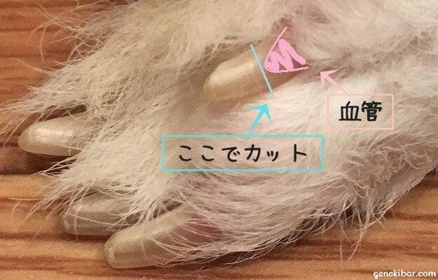 うさぎの爪の切り方