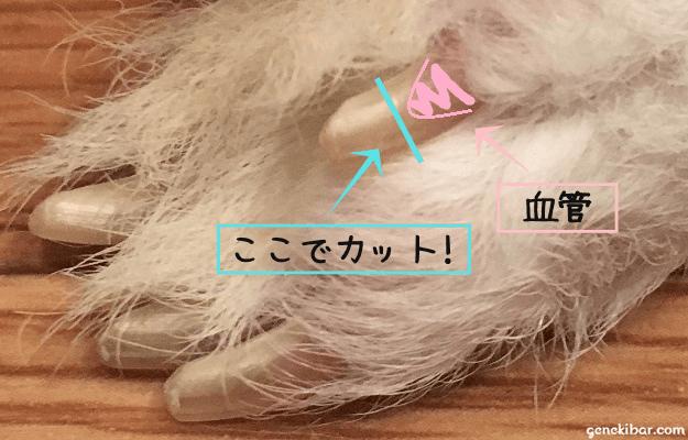 うさぎの爪の中にある血管と、爪を切る場所