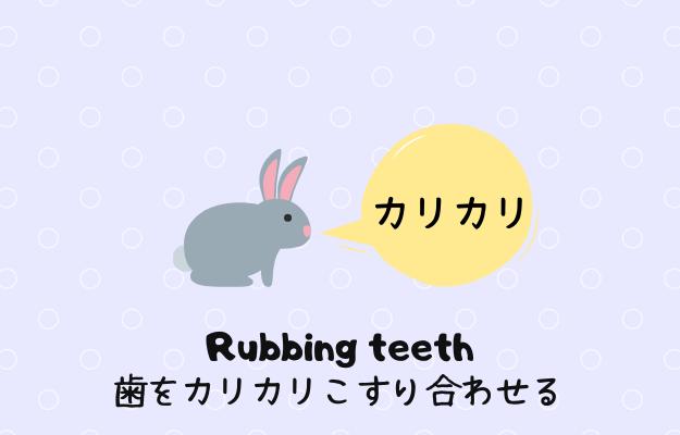 うさぎがカリカリ歯をこすり合わせる