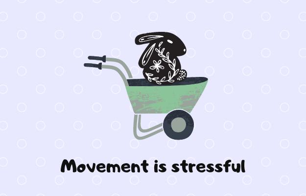 移動でストレスを感じるうさぎ